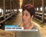 "Племзавод ""Октябрьский"""