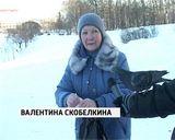 Зимовка уток у Диорамы