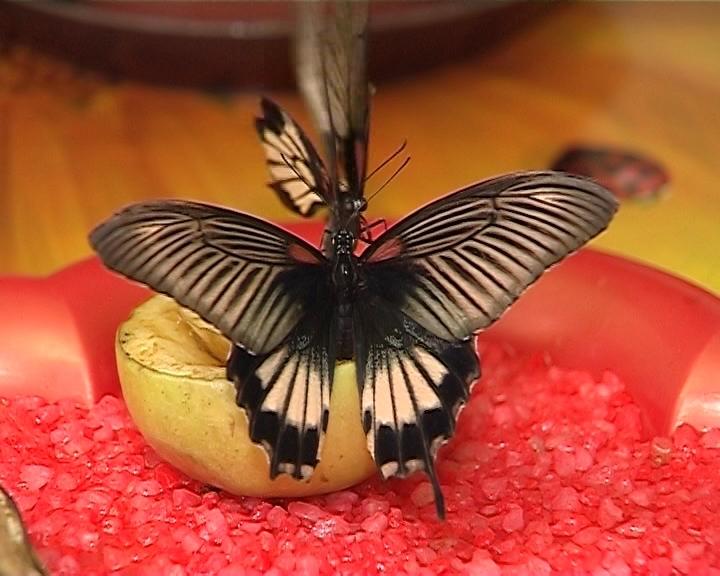 Выставка экзотических бабочек
