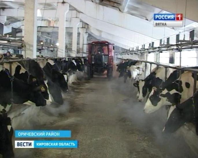 Зимовка скота в хозяйствах Оричевского района