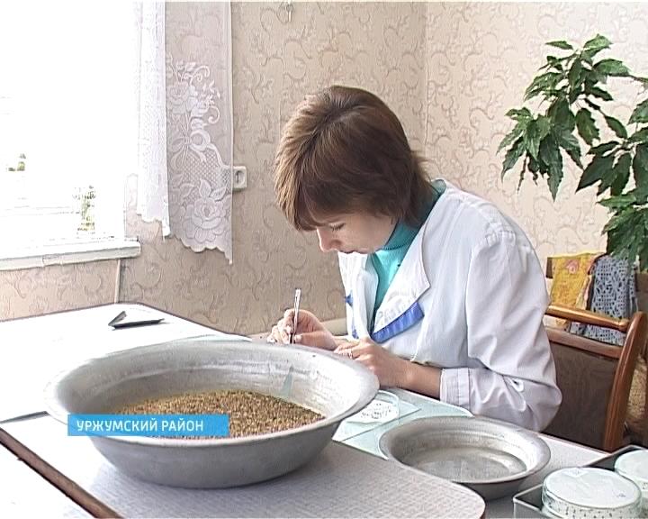 Сотрудники Россельхознадзора пресекли попытку завоза некачественных семян люцерны для двух хозяйств Уржумского района