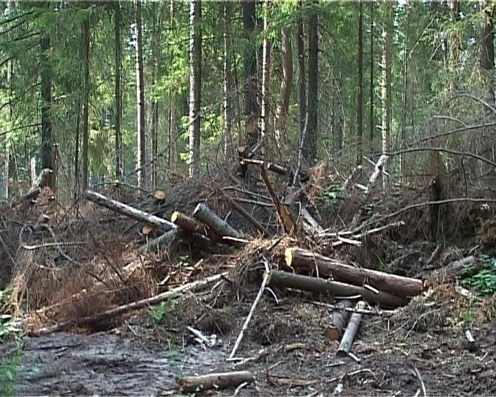 Проблема лесопиления