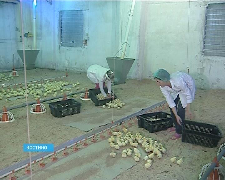 Реконструкция Костинской птицефабрики