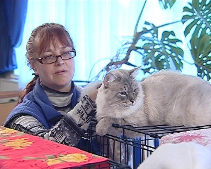 Благотворительная выставка кошек