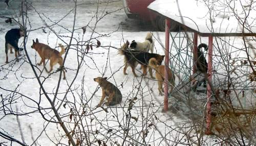Стая одичавших собак напала на частное подворье, где содержались кролики.