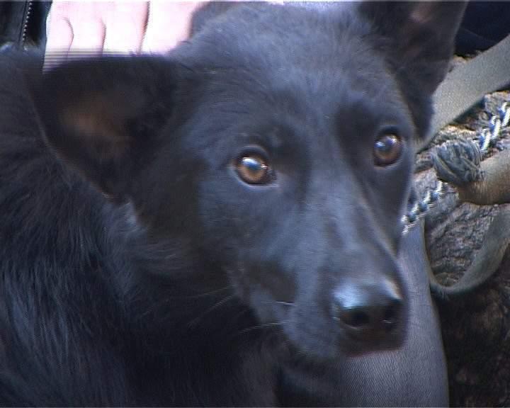 Кировчане могут помочь бездомным животным