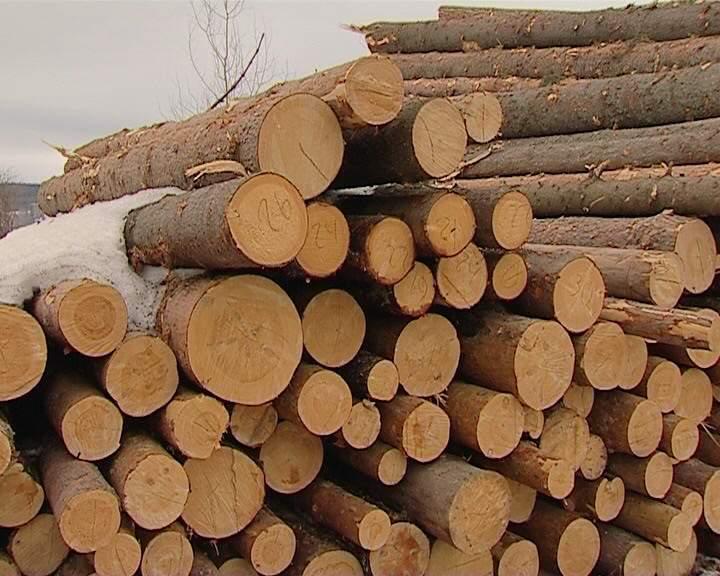 Порядок и нормативы заготовки гражданами древесины для собственных нужд возможно будут изменены.