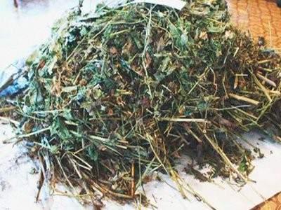 В Тужинском районе задержали семью наркодилеров.
