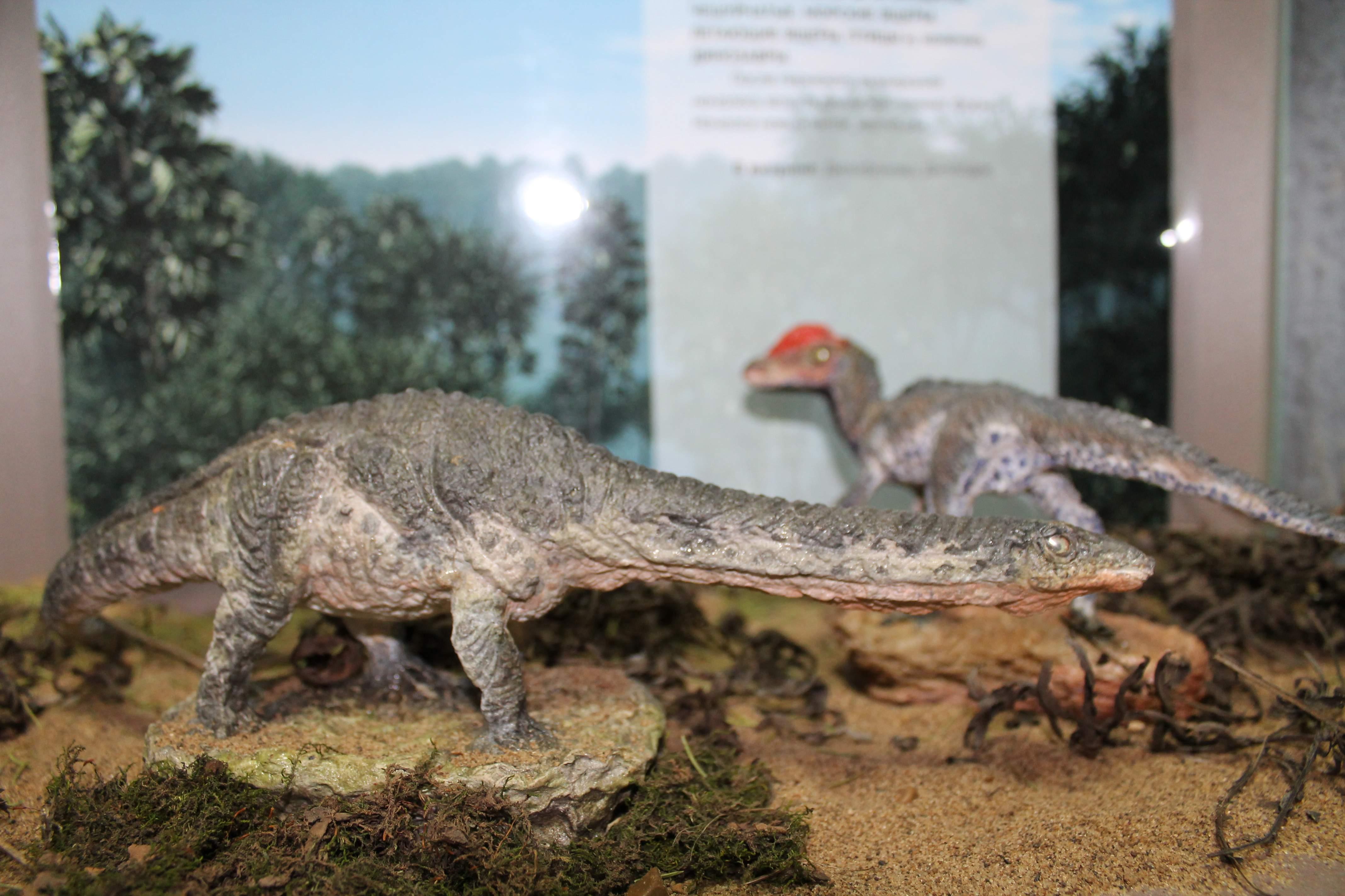 Новый проект Вятского палеонтологического музея