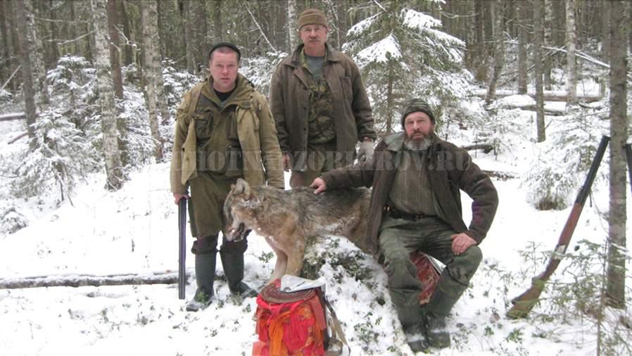 В Подосиновском районе застрелили волка, убившего гончую собаку.