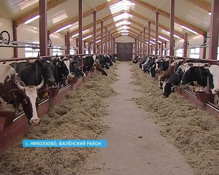 Открытие новой фермы в Фаленском районе