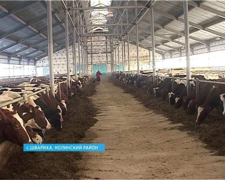 Молочно-товарная ферма в племколхозе