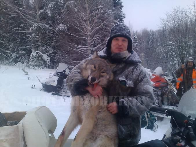 В Немском районе охотники застрелили матёрую волчицу.