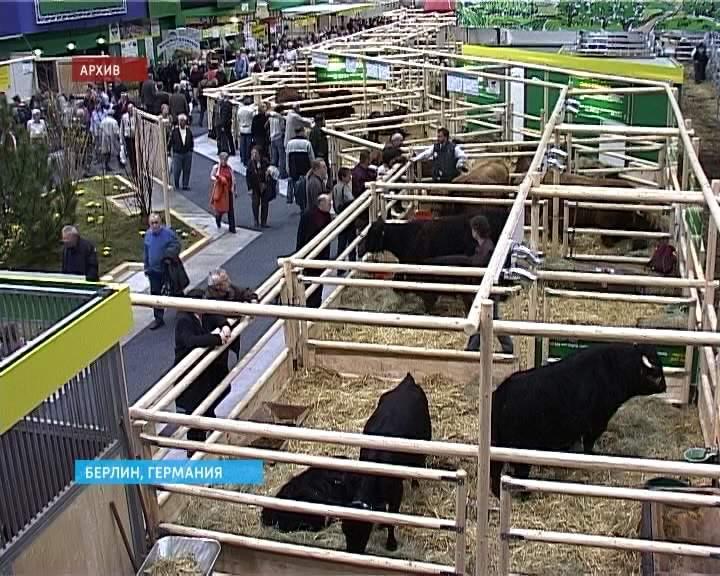 11 предприятий АПК кировской области участвовали в международной торговой выставке «Зеленая неделя» в Берлине