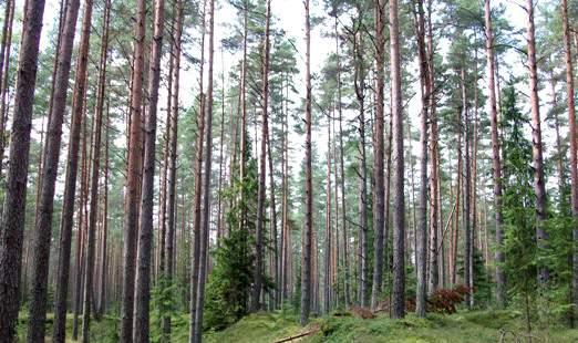 В Советском районе «черных» лесорубов приговорили к условным срокам и арестовали имущество.