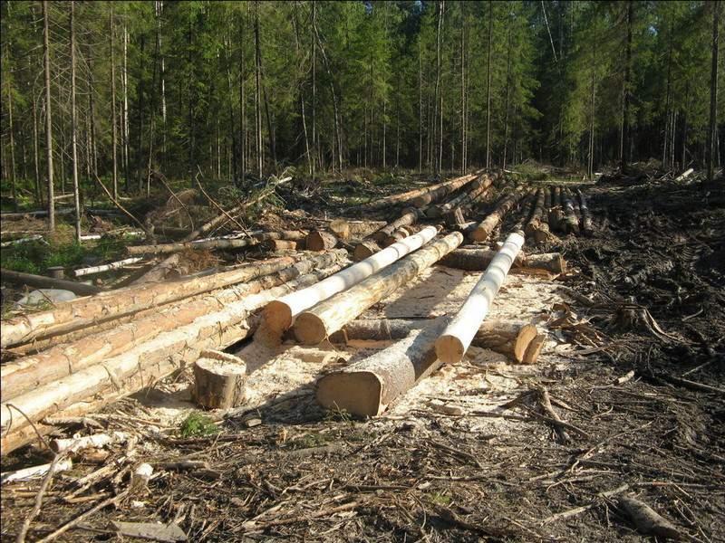 В Кильмезском районе лесничего оштрафовали на 20 тысяч рублей за служебный подлог.