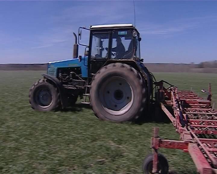 Весенний сев зерновых культур в племзаводе