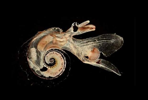 В мировом океане обнаружены десятки тысяч неизвестных форм жизни.