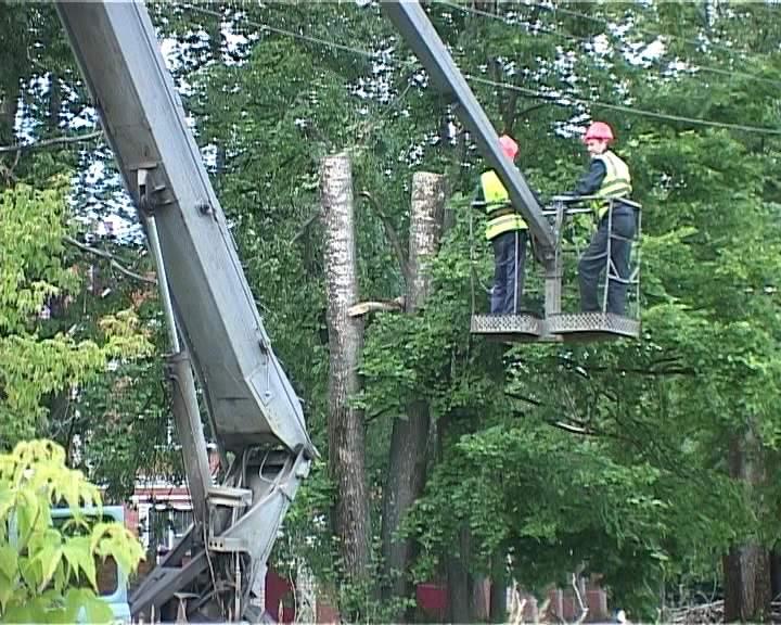 В Кирове продолжается снос аварийных деревьев