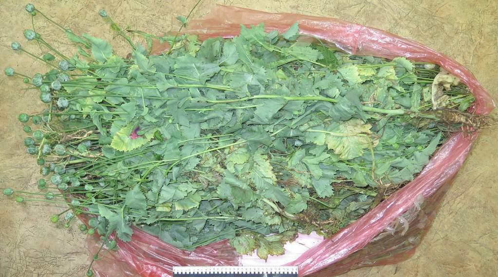 В Кирове уроженец Вьетнама в своем саду выращивал наркорастения.