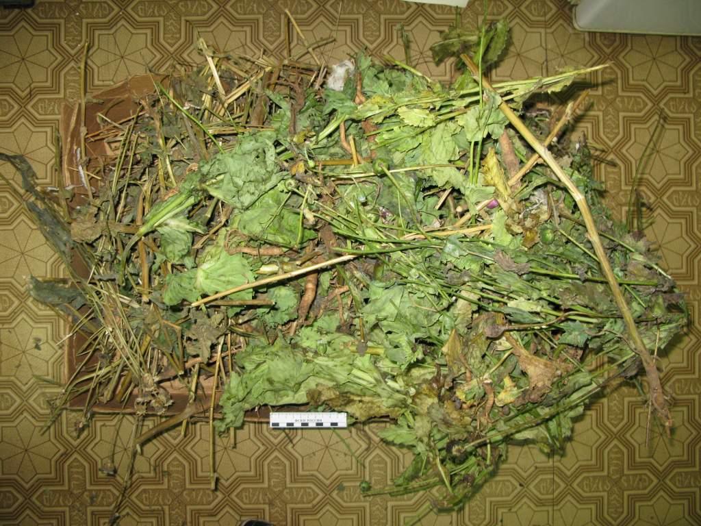 В п. Вахруши обнаружили склад «грязного» мака.