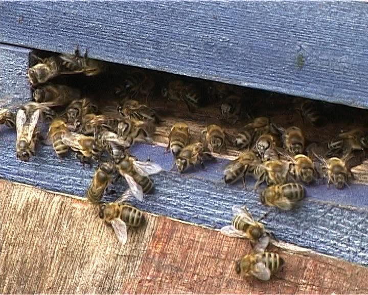 О содержании пчел и качестве продуктов пчеловодства