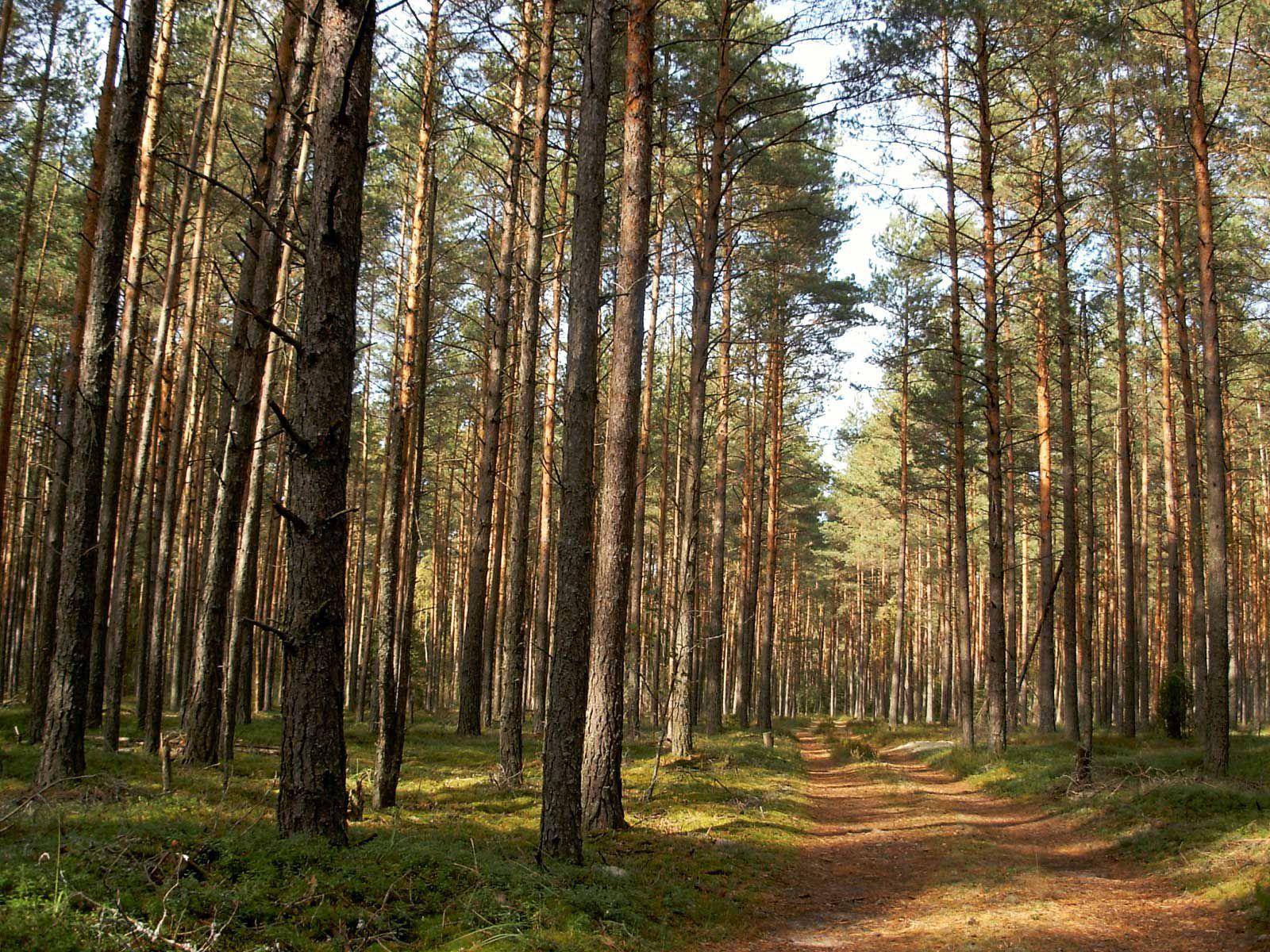 В Кирове отметили 110-летие профсоюза работников лесных отраслей.