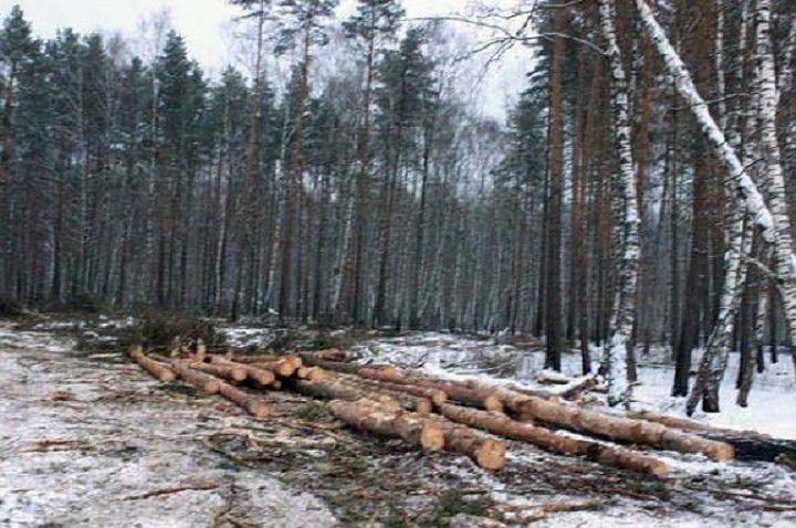 Жителя Советского района приговорили к 10 годам колонии за убийство знакомого на лесной делянке.