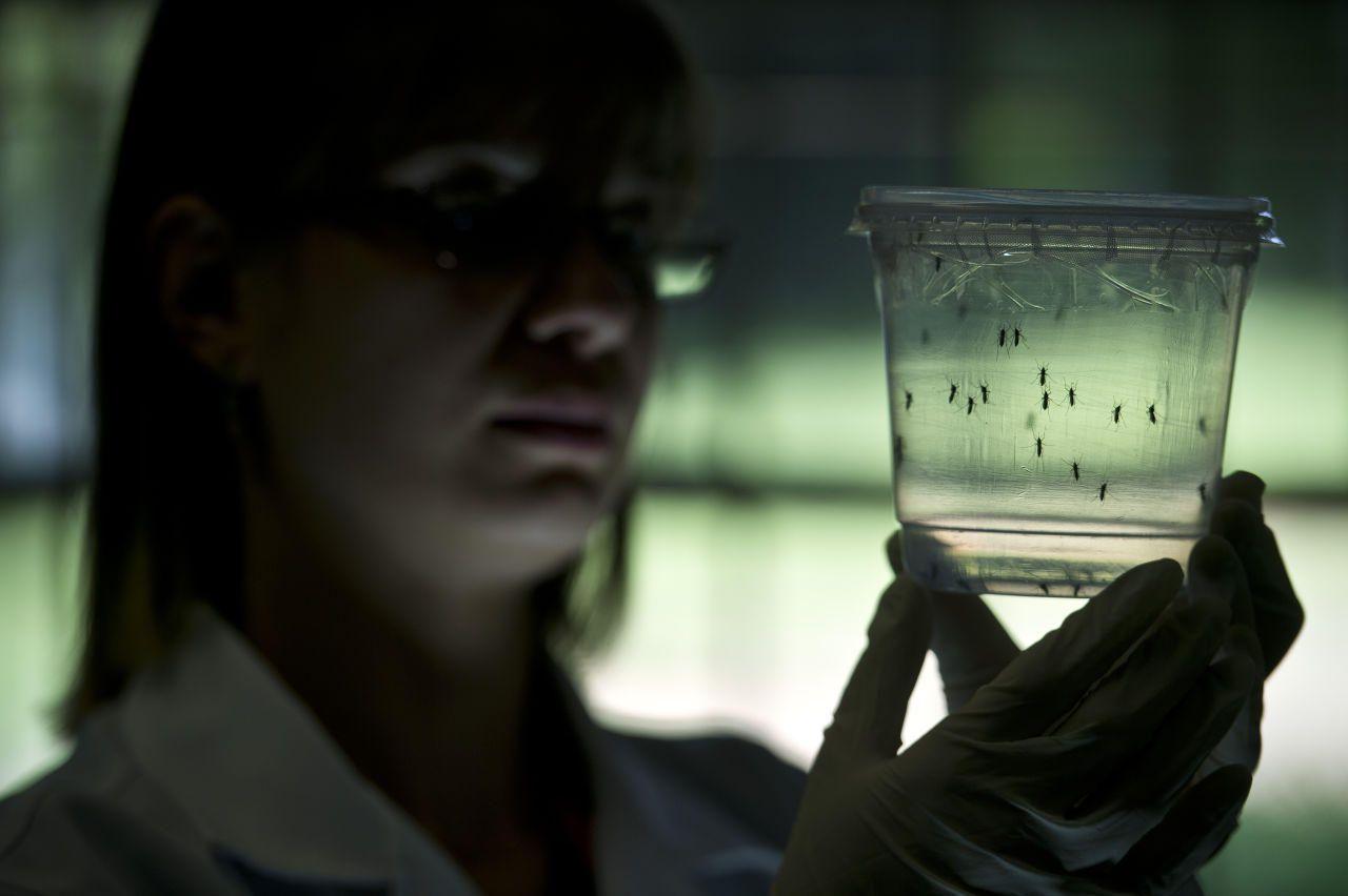 Беременным женщинам рекомендуют воздержаться от поездки в страны, где обнаружен вирус Зика.
