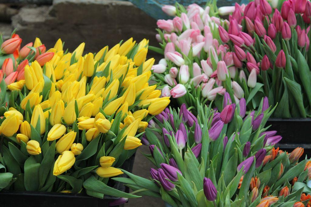 В Кировской области за год цветы подорожали на 20 процентов.