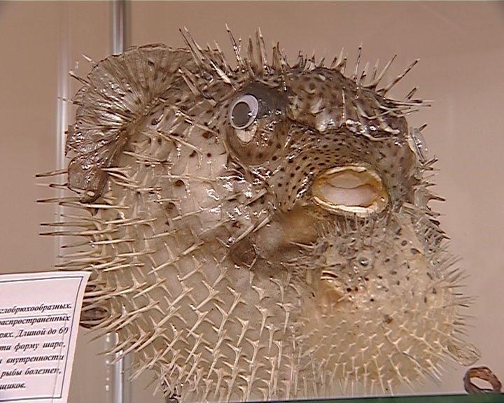 Выставка «Тайны подводного мира» в музее Вятских народных художественных промыслов