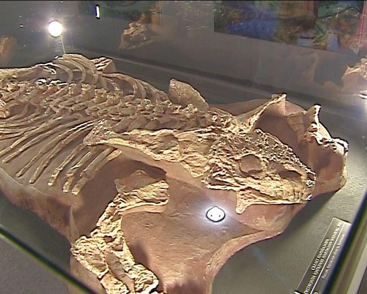 Находки котельничских палеонтологов