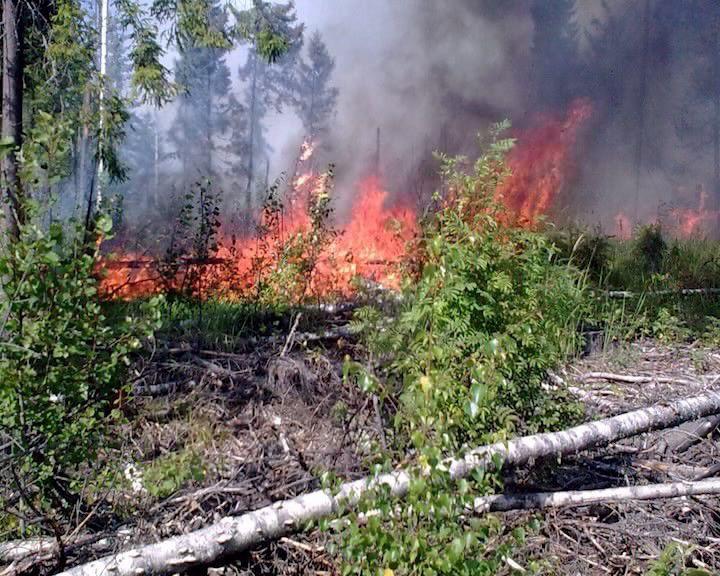 В Кировской области ожидается высокая пожарная опасность
