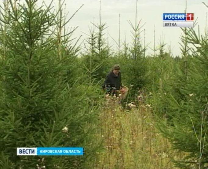 В Советском районе нашли пропавшую в лесу пенсионерку