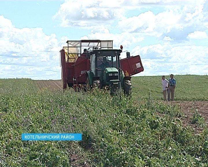 Фермеры Савковы
