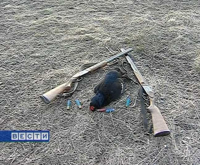В Кировской области открывается охота на дичь