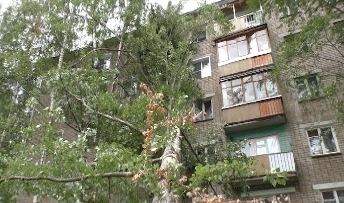 И снова об упавшем дереве