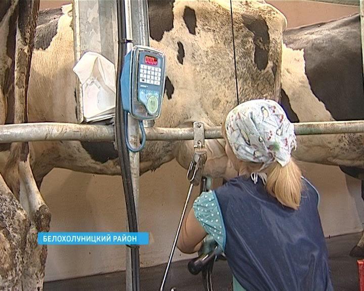 Молочная ферма с новыми технологиями в селе Полом Белохолуницкого района