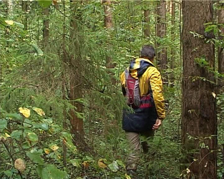 интернет программы чтобы не заблудиться в лесу