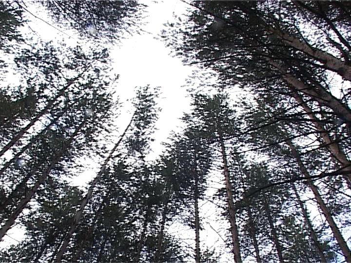 В Кировской области разысканы очередные грибники