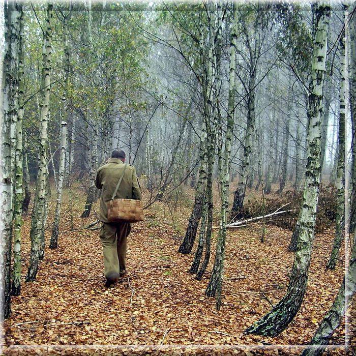 ВКирово-Чепецком районе заблудившегося грибника искали сутки