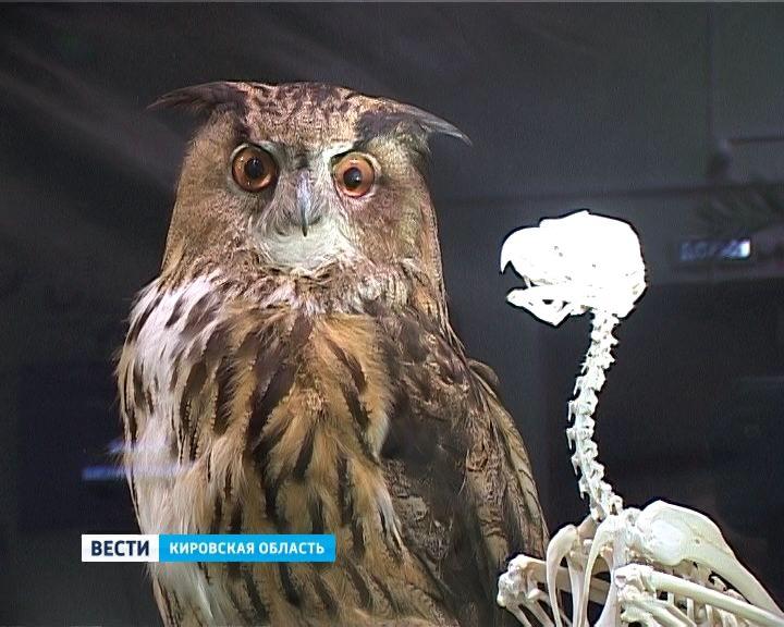 «Тайны анатомии» в Кировском зоологическом музее