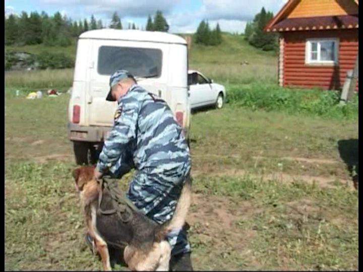 Заблудившемуся кировчанину с собакой пришлось ночевать в лесу