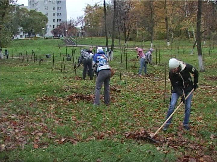 В Кировской области посадили 9 тысяч деревьев