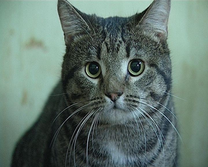 Выставка-раздача бездомных кошек 12 ноября в Областном Дворце молодежи