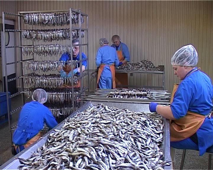 Вакансии русская рыбоперерабатывающая компания бухгалтер как правильно вести бухгалтерию ип самостоятельно