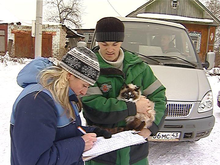 В Кирове за три дня сделали прививки от бешенства 500 животным