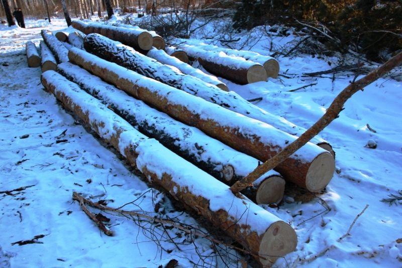 ВТюменской области нелегально срубили 32 кубометра деревьев