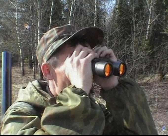 В Кировской области злоумышленники убили трех лосей