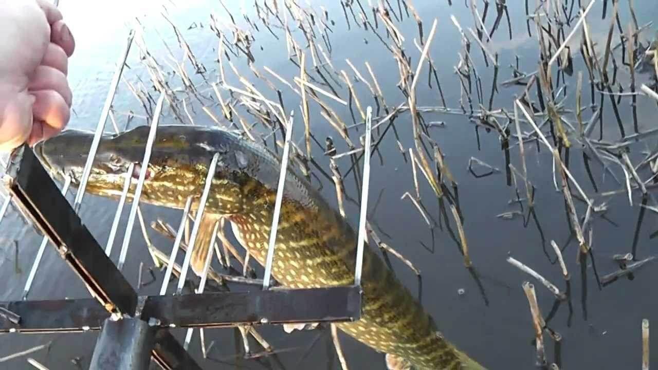 В крыму рыбалка на пеленгаса